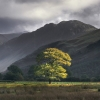 Buttermere, England- Lone tree in front of rolling hills