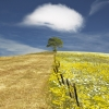 Gaucin, Spain- country field split by wire fence, tree under puffy white cloud